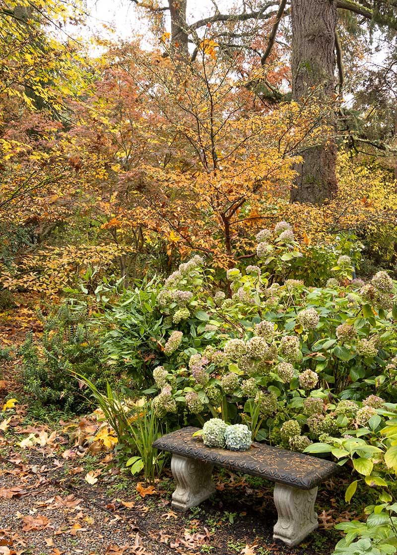Dietrick-fall-garden_2068M_800